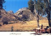 paysage malgache
