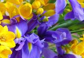 Iris et fresia