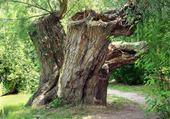 TRISTES,arbres morts !!