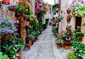 Ruelle en fleurs