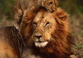 Des beaux animaux