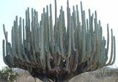 Puzzle Cactus