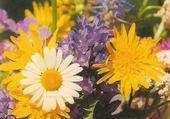 Bouquet Alpin