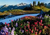 Fleurs et neige en montagne