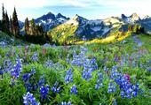 Vallée en fleurs