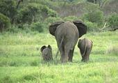 une mère et ses petits
