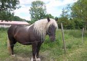 Puzzle beau cheval
