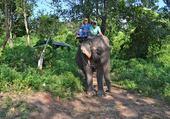 Eléphant Thaïlandais