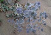 Puzzle Jolis chardons bleus