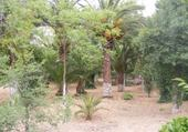 Sidi Bel Abbes