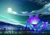 fleur sous pleine lune