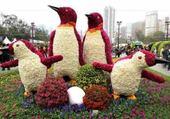 Carnaval de fleurs
