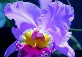 Jolie orchidée