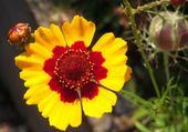 Puzzle Belle petite fleur