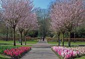 Promenade au printemps