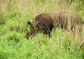 Puzzle rhino dans la nature