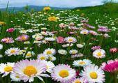 Pairie en fleurs