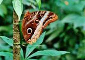 Puzzle gros papillon