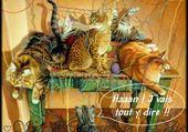 chatons turbulents