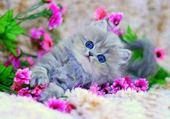joli chaton