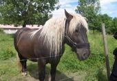 beau cheval