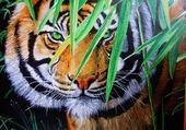 Puzzle Puissance de la nature: tigre