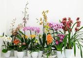 Voici des orchidées