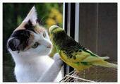 Puzzle chaton et perruche