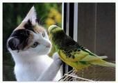 chaton et perruche