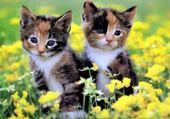 duo jolis chatons