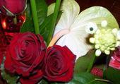 Roses velours