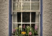 Windows - Dublin -  Ireland