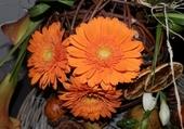 Belle couleur orangée