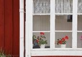 Puzzle Windows - Flowers