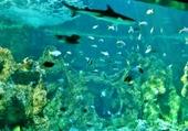 Puzzle aquarium de Sidney