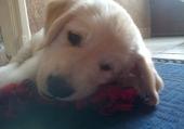 mon chien heaven