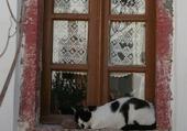 Doors - Window Cat - Santorini