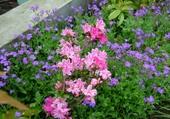 Bordure de jardin fleurie