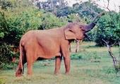 Puzzle femelle éléphant