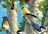jolies plumes