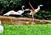 parc aux oiseaux (Iguaçu)