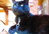 Réglisse, le chat ;)