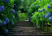 Chemin de fleurs bleu