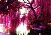 Paysage tout en rose