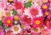 Parterre bien fleuri
