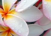 Fleurs mouillées