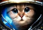 Chat Cosmonaute