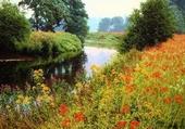 rivière et coquelicots