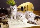 trio de chatons blanc