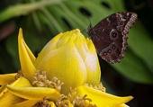 papillon noir sur fleur jaune